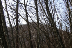 161210大猿山~白髪岩 (5)s