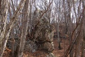161210大猿山~白髪岩 (20)s