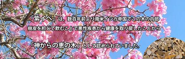ipe7.jpg