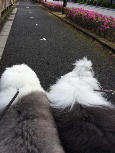 並んでお散歩