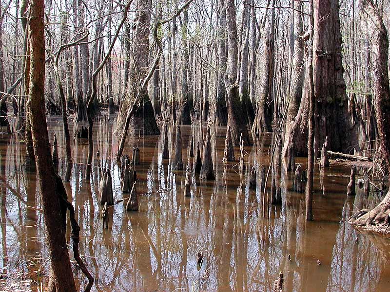 毒沼で毒に侵される要因は色々と考えられるかも