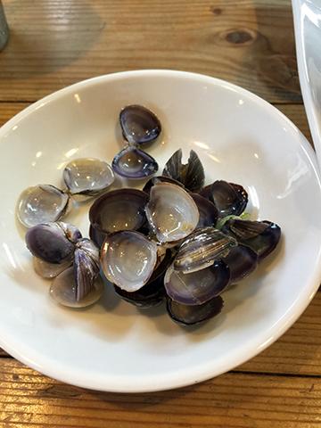0531貝殻