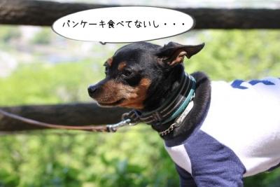 2016_04_29_9999_90.jpg