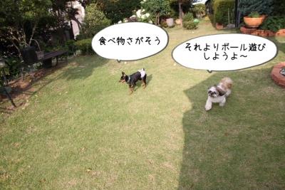 2016_06_11_9999_21.jpg