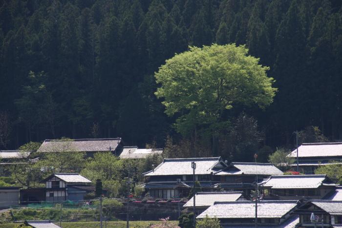 160430-akechi-36.jpg