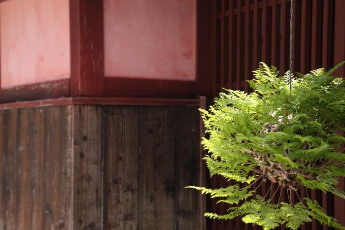 160618-fukiya-33.jpg