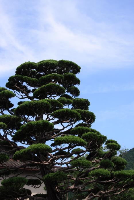160618-katsuya-24.jpg