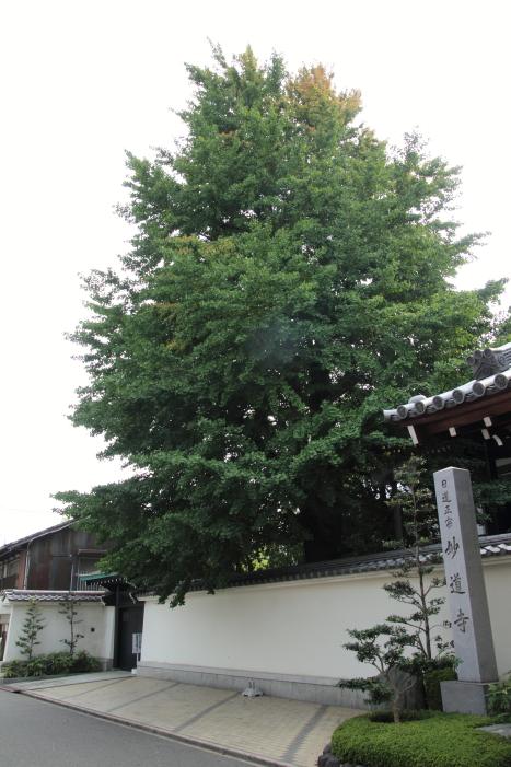 160814-shira-13.jpg