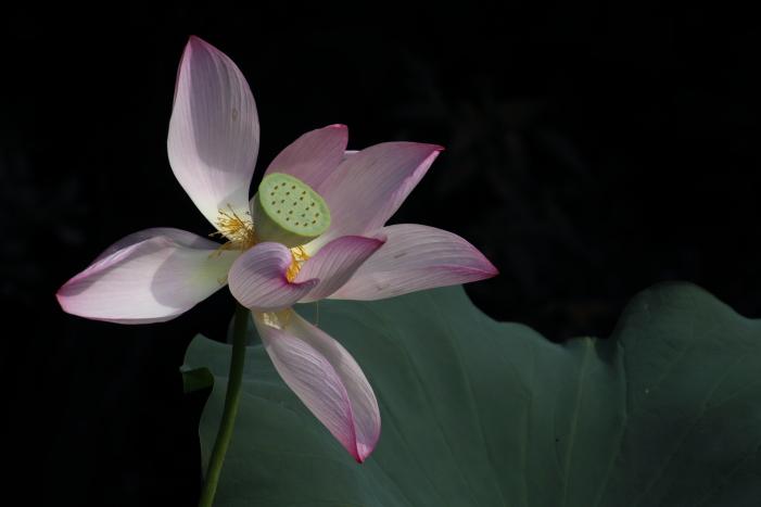 160903-garden-04.jpg