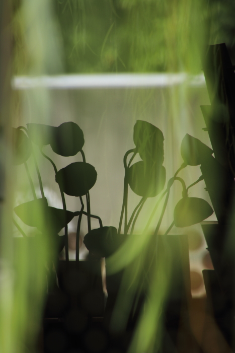 160903-garden-08.jpg