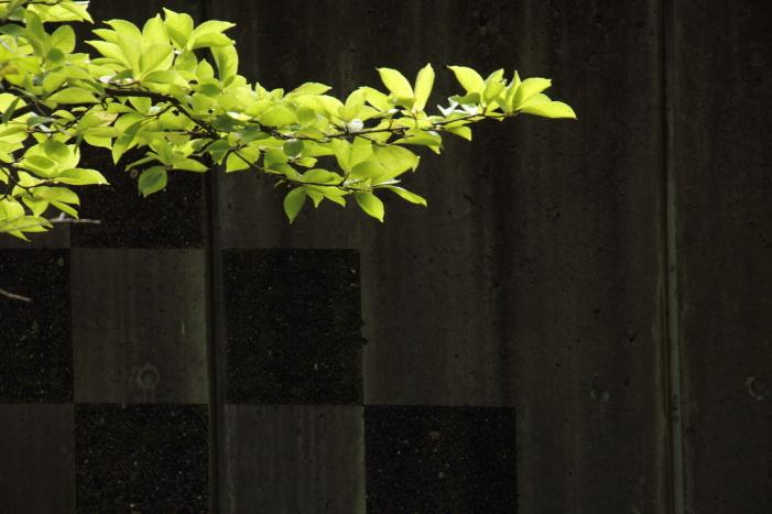 160903-garden-12.jpg