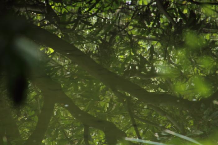 160903-garden-14.jpg