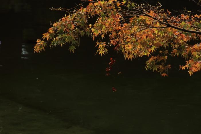 160903-garden-15.jpg