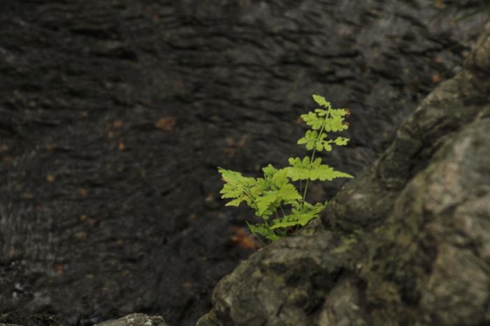160903-garden-30.jpg