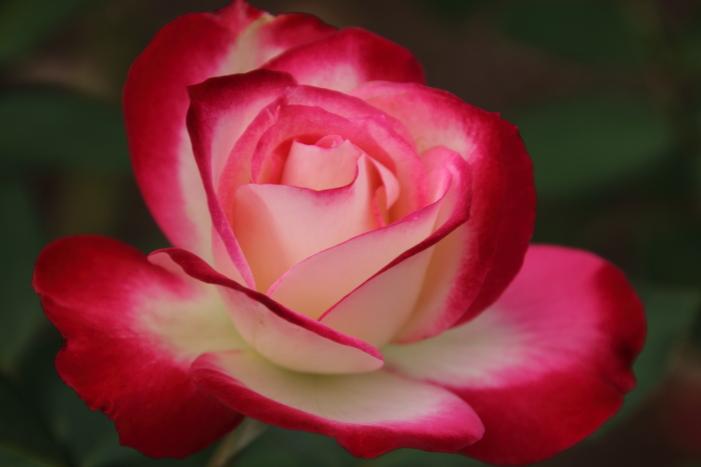 161023-rose-16.jpg