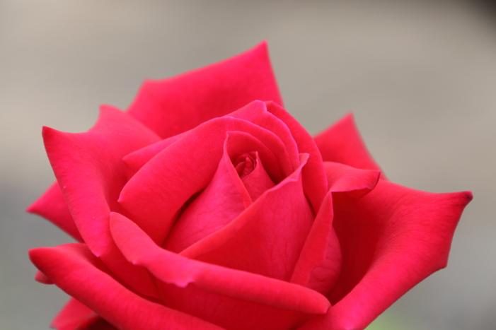 161023-rose-20.jpg