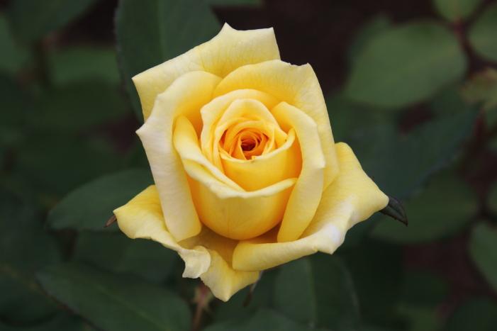 161023-rose-21.jpg