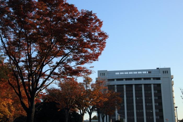 161112-nougyo-18.jpg