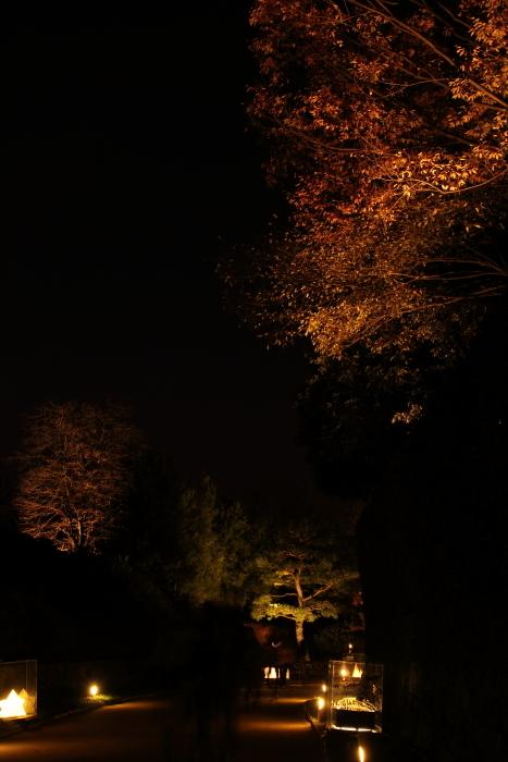 161203-shira-104.jpg