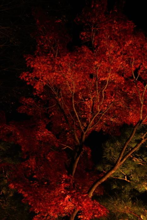 161203-shira-106.jpg