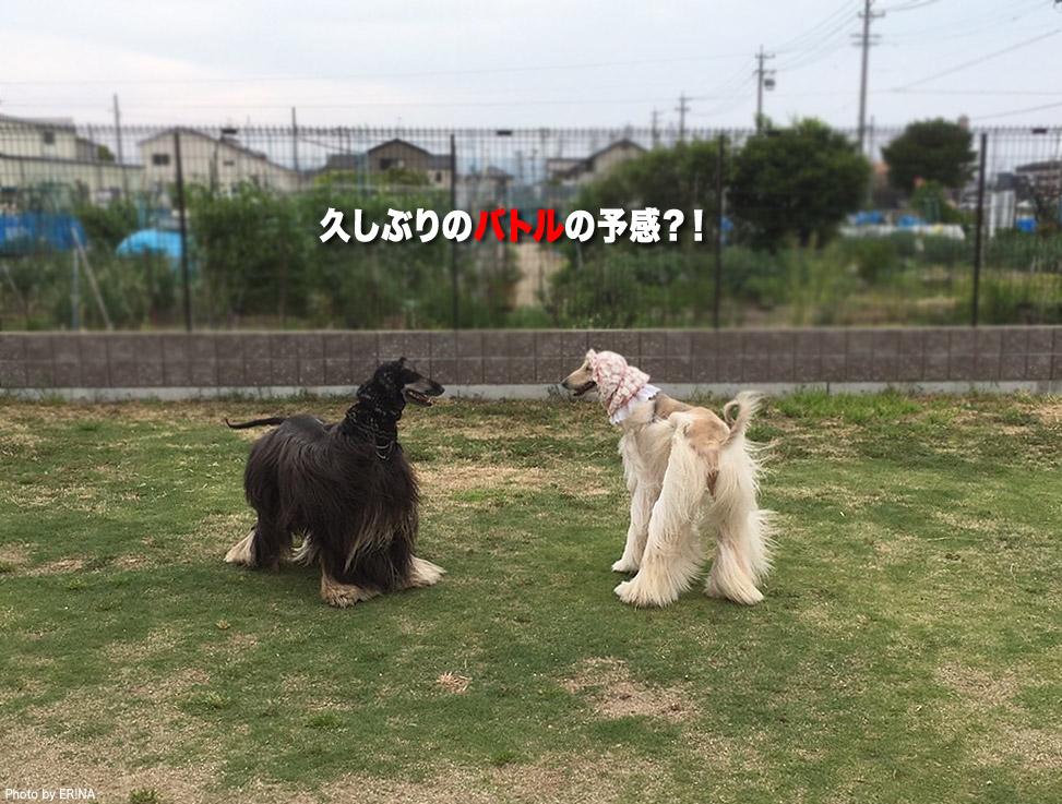 Photo2016_0501_10.jpg