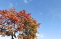 紅葉の季節 (8)