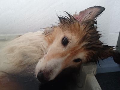 5 10 入浴3