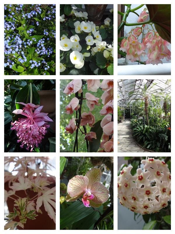 冬の庭園2 b