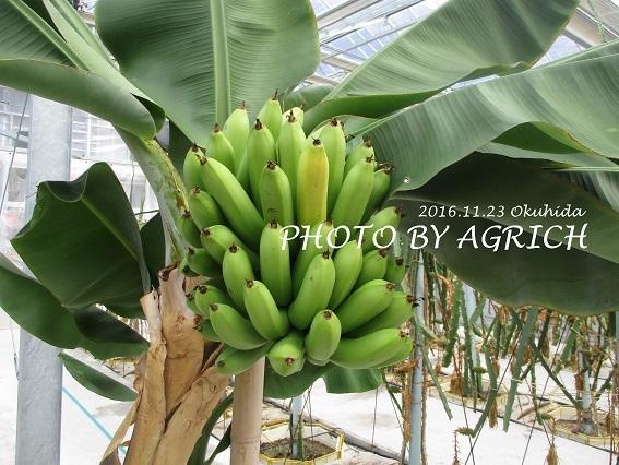 bananaokuhida
