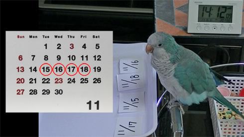 カレンダー1_1