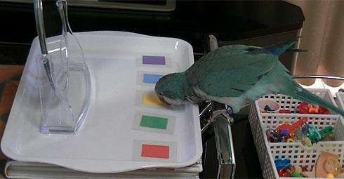 鏡でシールの色当て1_13