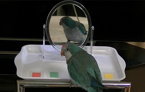 鏡でシール色当て1_4