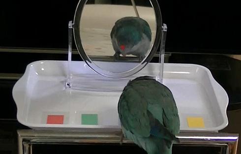 鏡でシールの色当て1_5