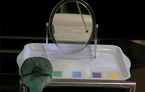 鏡でシールの色当て1_6