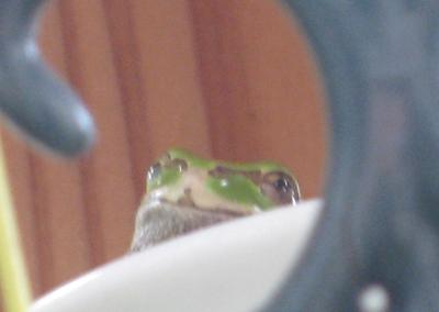 カエルの寝床3