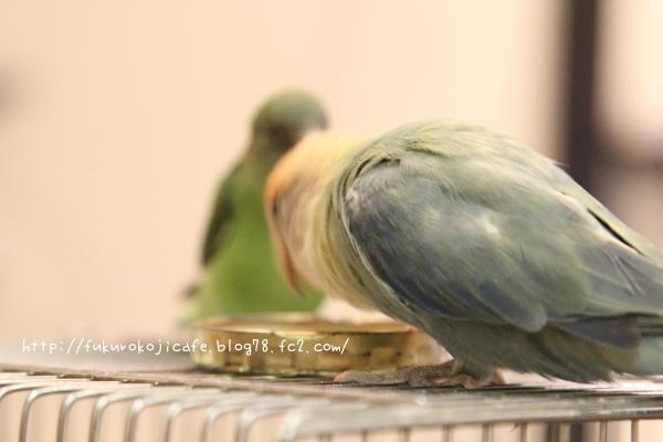 ちーくんの羽色