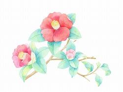冬の花 椿