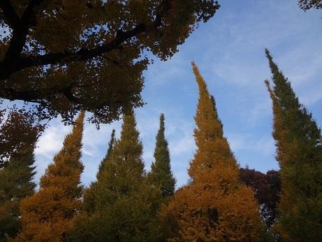 外苑銀杏並木3