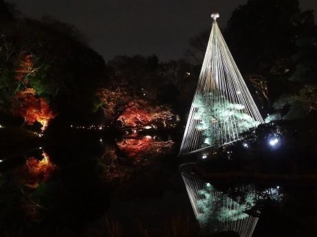 新江戸川公園夜3