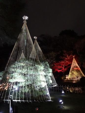 新江戸川公園夜4