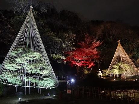 新江戸川公園夜5