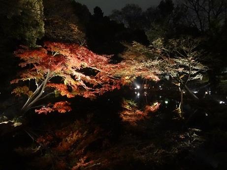 新江戸川公園夜11