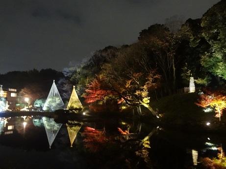 新江戸川公園夜13