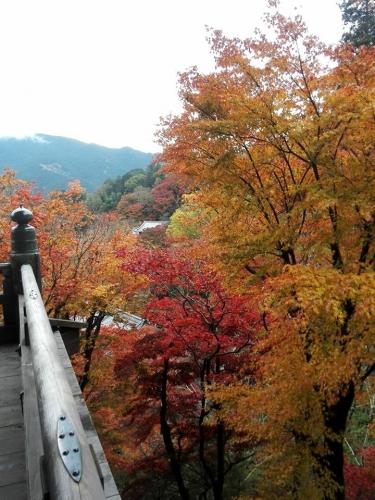 11月の長谷寺