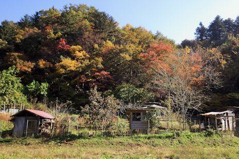 色鮮やかな農場