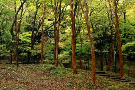 小塚山紅葉3