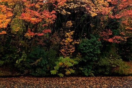 湖尻の紅葉