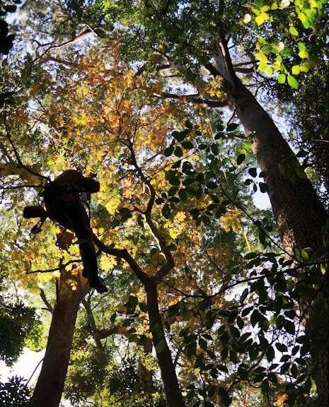 木に登って調査