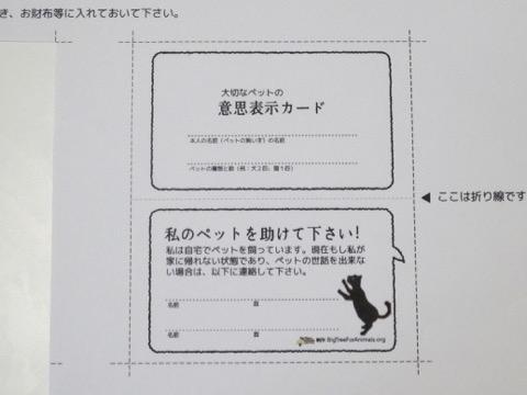 160825petcard