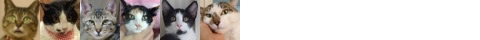 160829cats